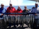 Coho salmon limit
