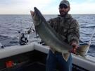 19lb lake trout